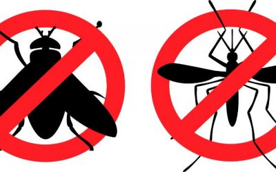 How to use UV light for Pest Control around your Home or Workplace